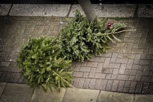 Two Christmas trees on the pavement